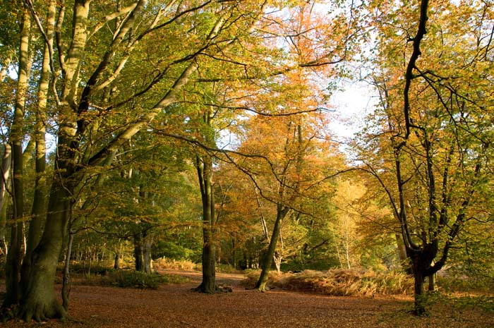 Why you should visit Epping Forest this winter | Christmas in West ...