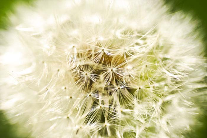 """Seed head"" © Geoff Wilkinson"